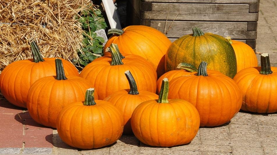 Zucca: per Halloween un vero e proprio boom