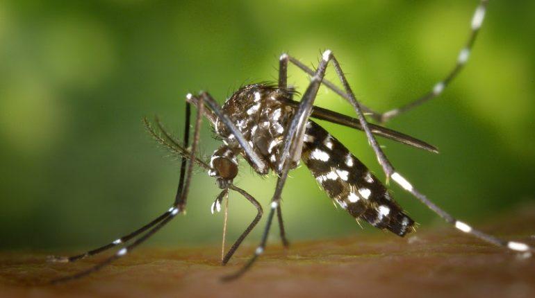 West Nile Virus (WNV)
