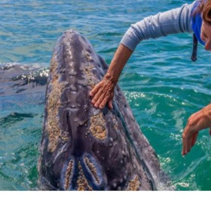 Baja California ed il mondo delle balene