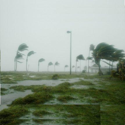 Palme e uragani