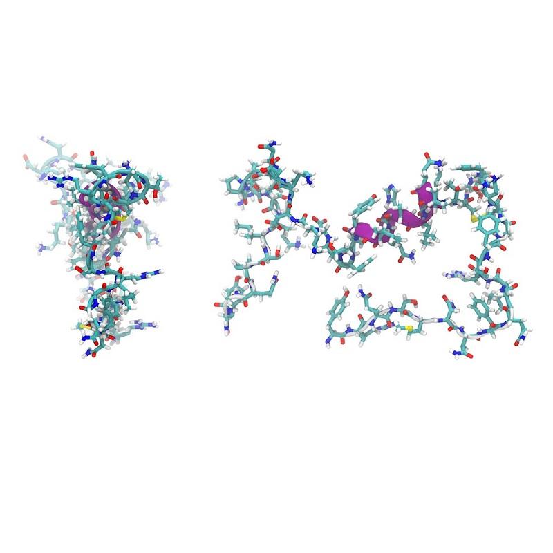 Peptidi: studi recenti dimostrano