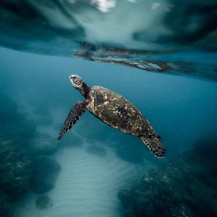 ambiente marino