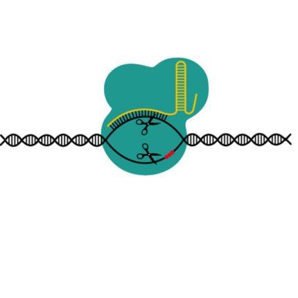 CRISPR: dibattito sulla correzione del genoma