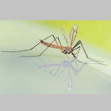 Malawi: contro la malaria