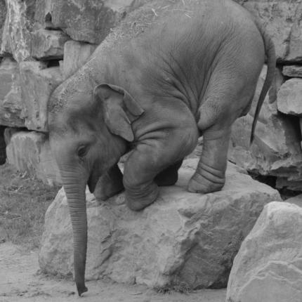 """""""Dumbo""""il classico della Disney lento al botteghino?"""