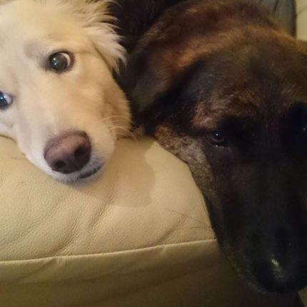 Lo sguardo espressivo dei cani