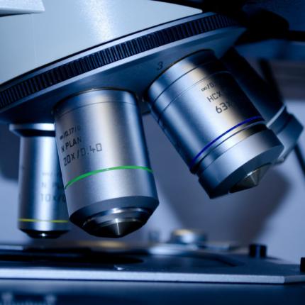 Scoperto che le cellule immature possono trasformarsi in staminali