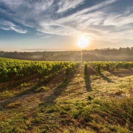 Il vino e il clima