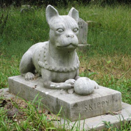 Un cimitero riservato agli animali foto
