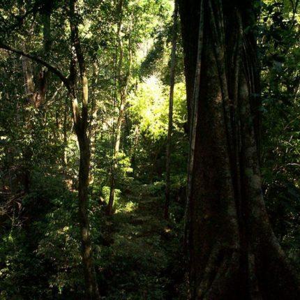 Salviamo dal collasso la famosa Selva Lacandona foto