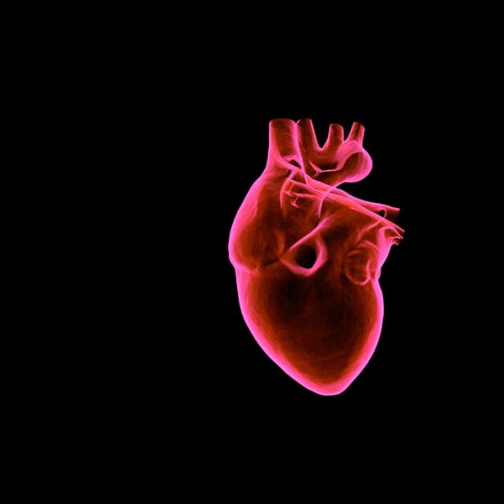 Cellule cardiache umane