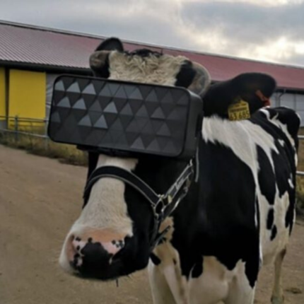 Mucche con visore VR