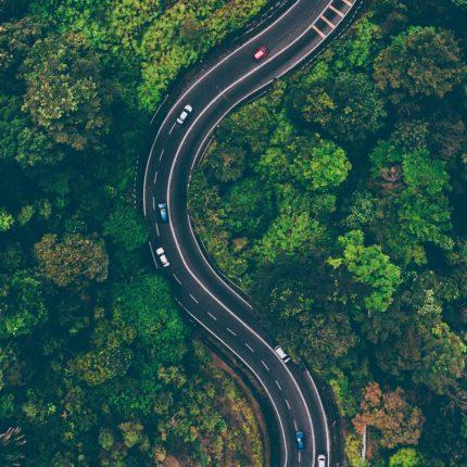 Napoli volta pagina tre milioni di nuovi alberi foto