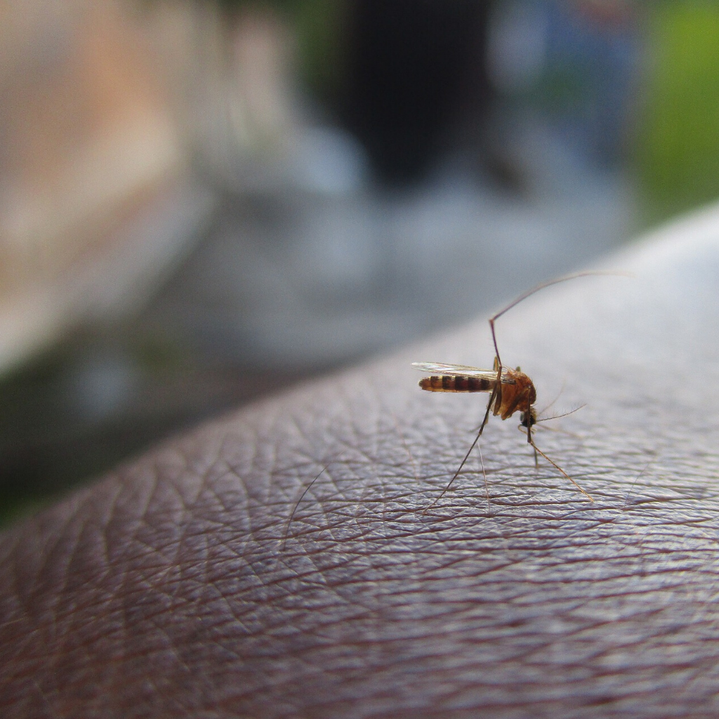 Allarme zanzara coreana