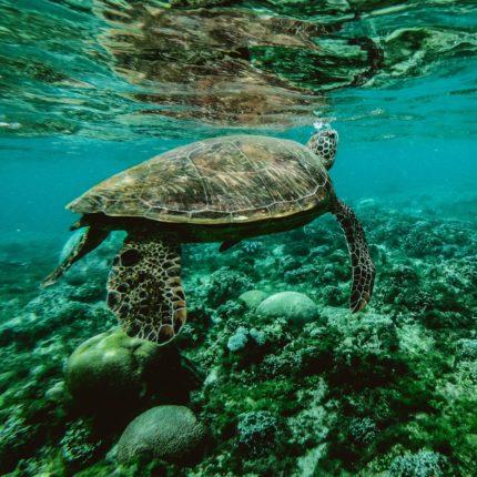 Tartarughe marine e piccoli cetacei foto