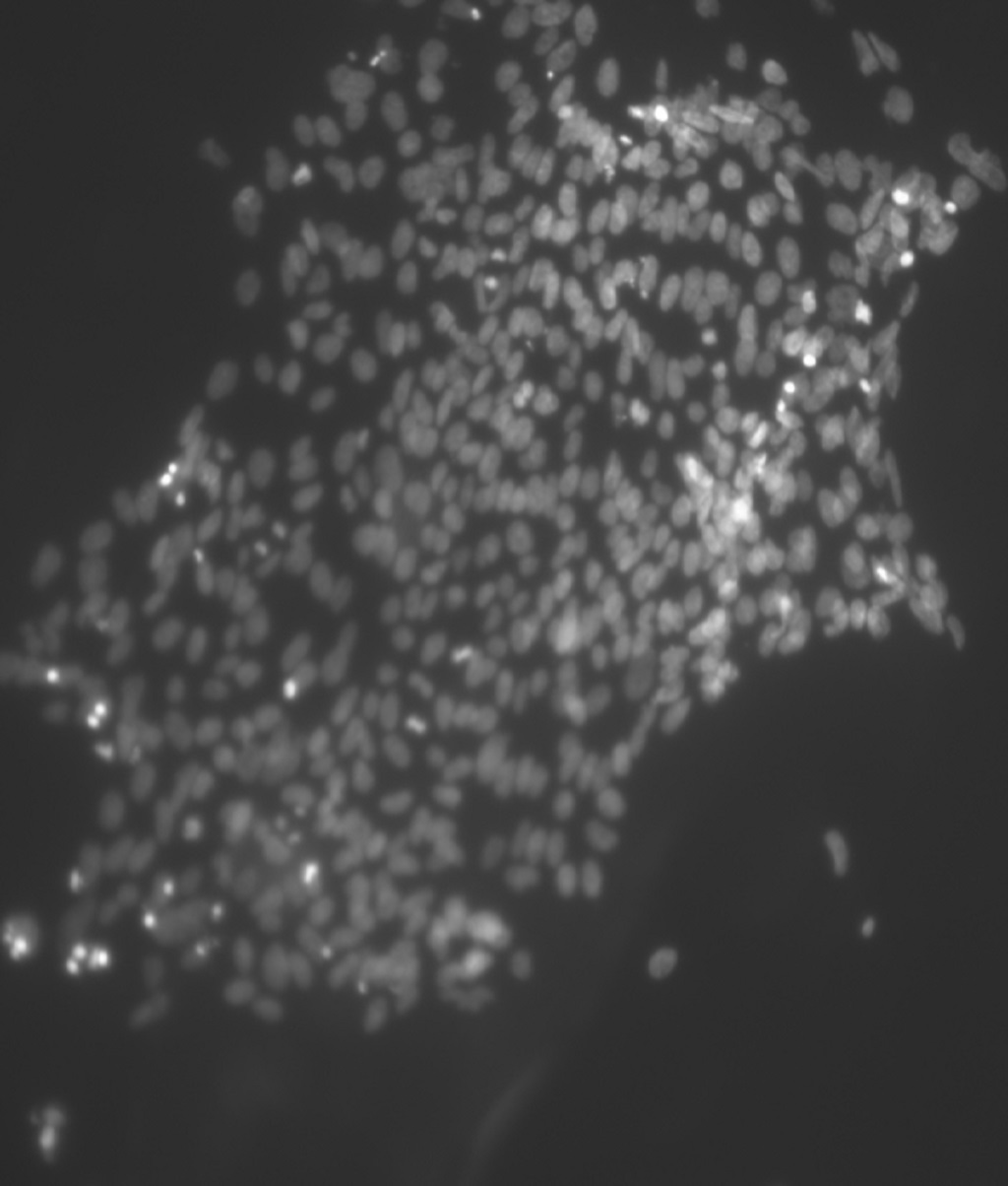 Cellule staminali una frontiera scientifica foto