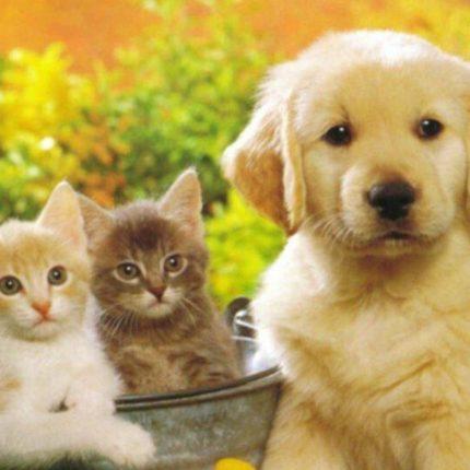 In Cina vietato mangiare cani e gatti