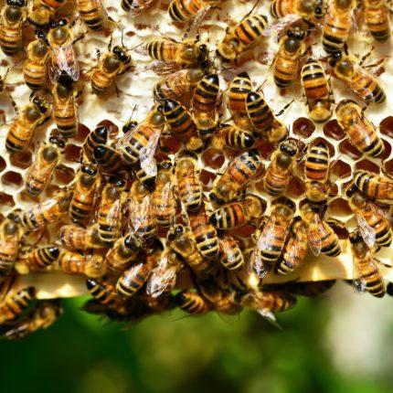 A primavera le api sciamano in città foto