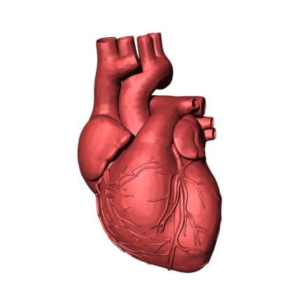 Origine tumore al cuore scoperta