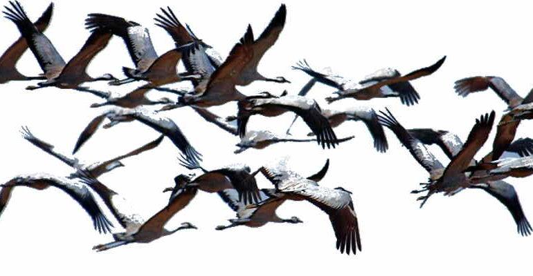 giornata mondiale uccelli migratori 2020 onu