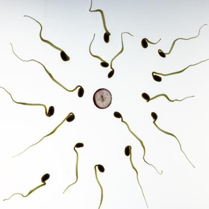 uova umane attraggono lo sperma di specifici uomini