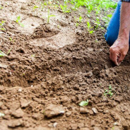 Agricoltura e lavoro