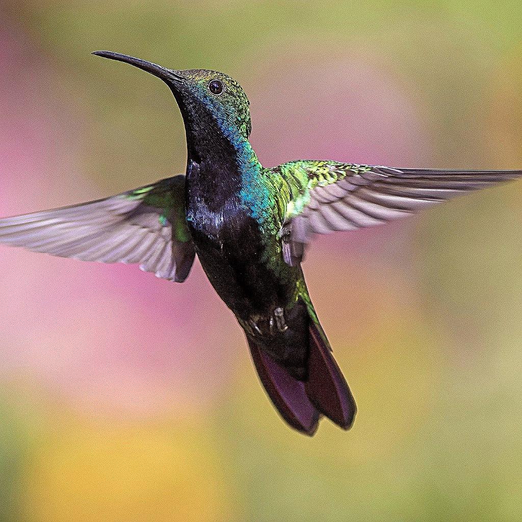 I colibrì e la loro incredibile vista