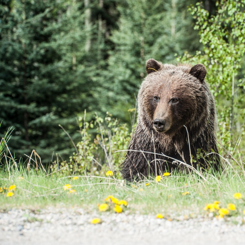 La Provincia di Trento e l'orso