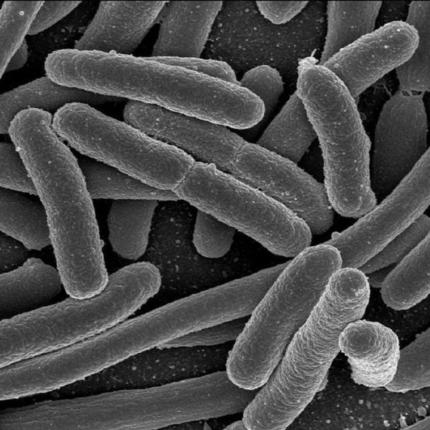 batteri sono più letali con la microgravità