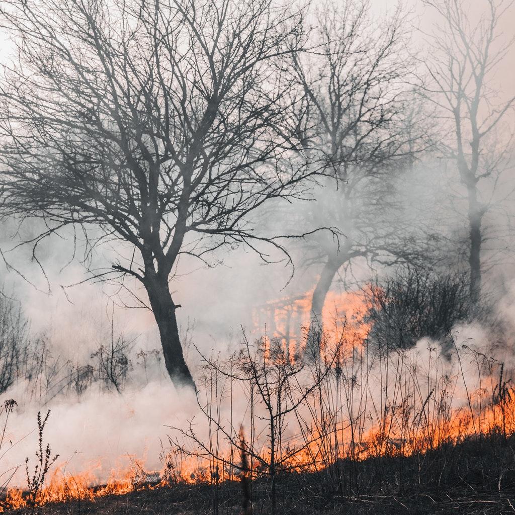 Italia devastata dagli incendi
