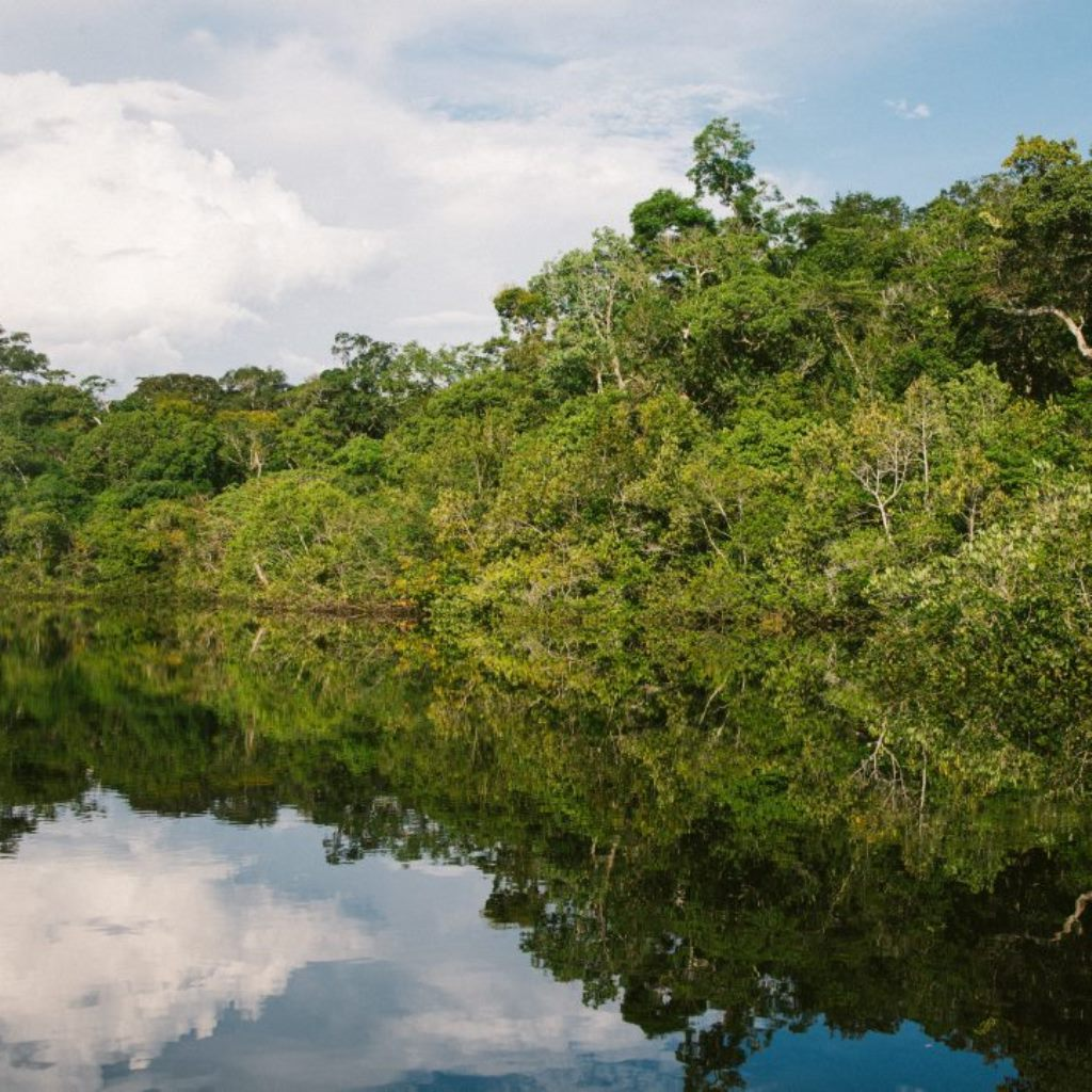 Amazzonia in fiamme tipping point vicino foto