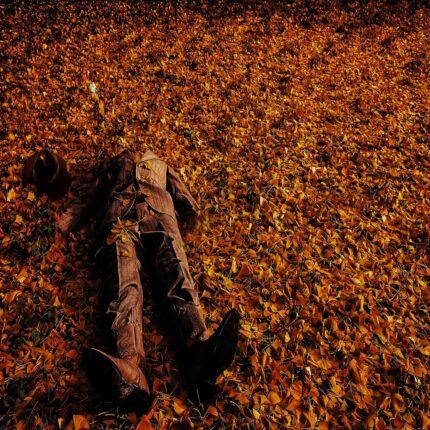 Gli alberi possono aiutare a ritrovare i cadaveri umani in decomposizione