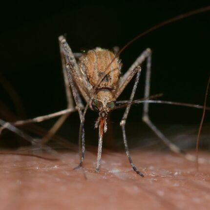 Perché le zanzare preferiscono il sangue umano