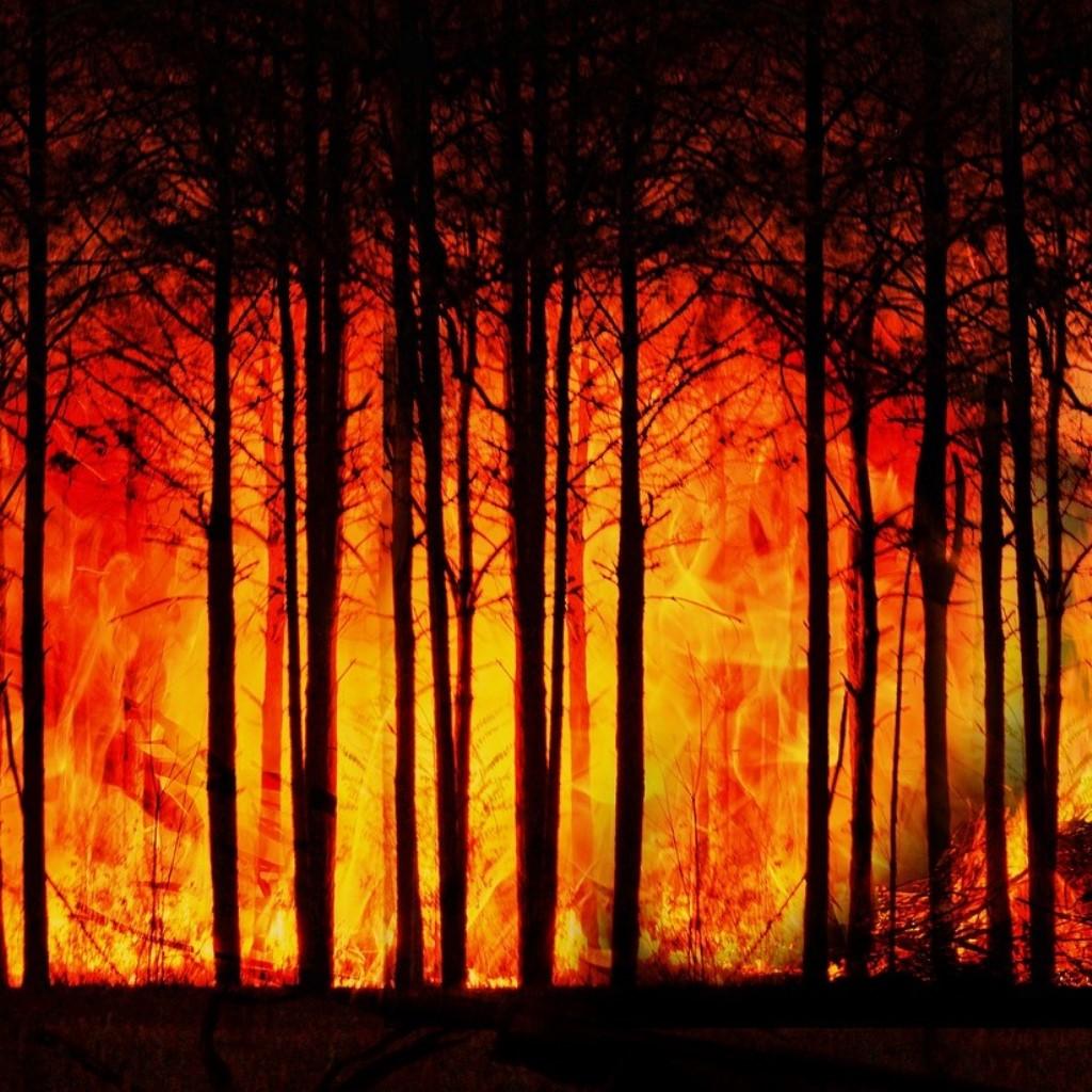 La costa occidentale degli Usa è devastata dagli incendi foto