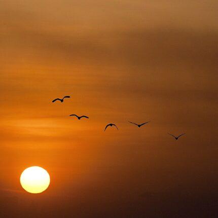 Coscienza degli uccelli