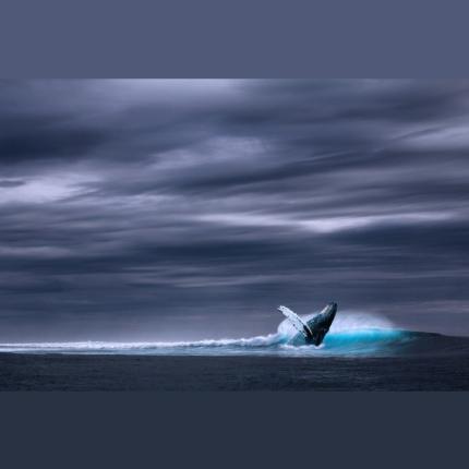 Rischio estinzione balene imminente e preoccupante