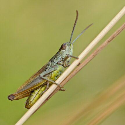 Un numero enorme di locuste invade l'Africa Orientale foto