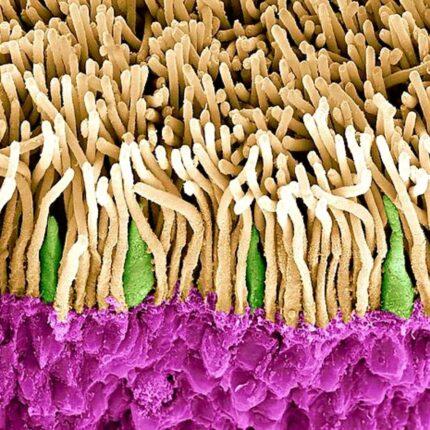 Rigenerazione delle cellule oculari