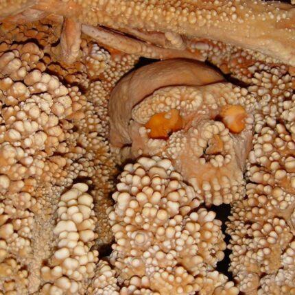 Scheletro di Neanderthal