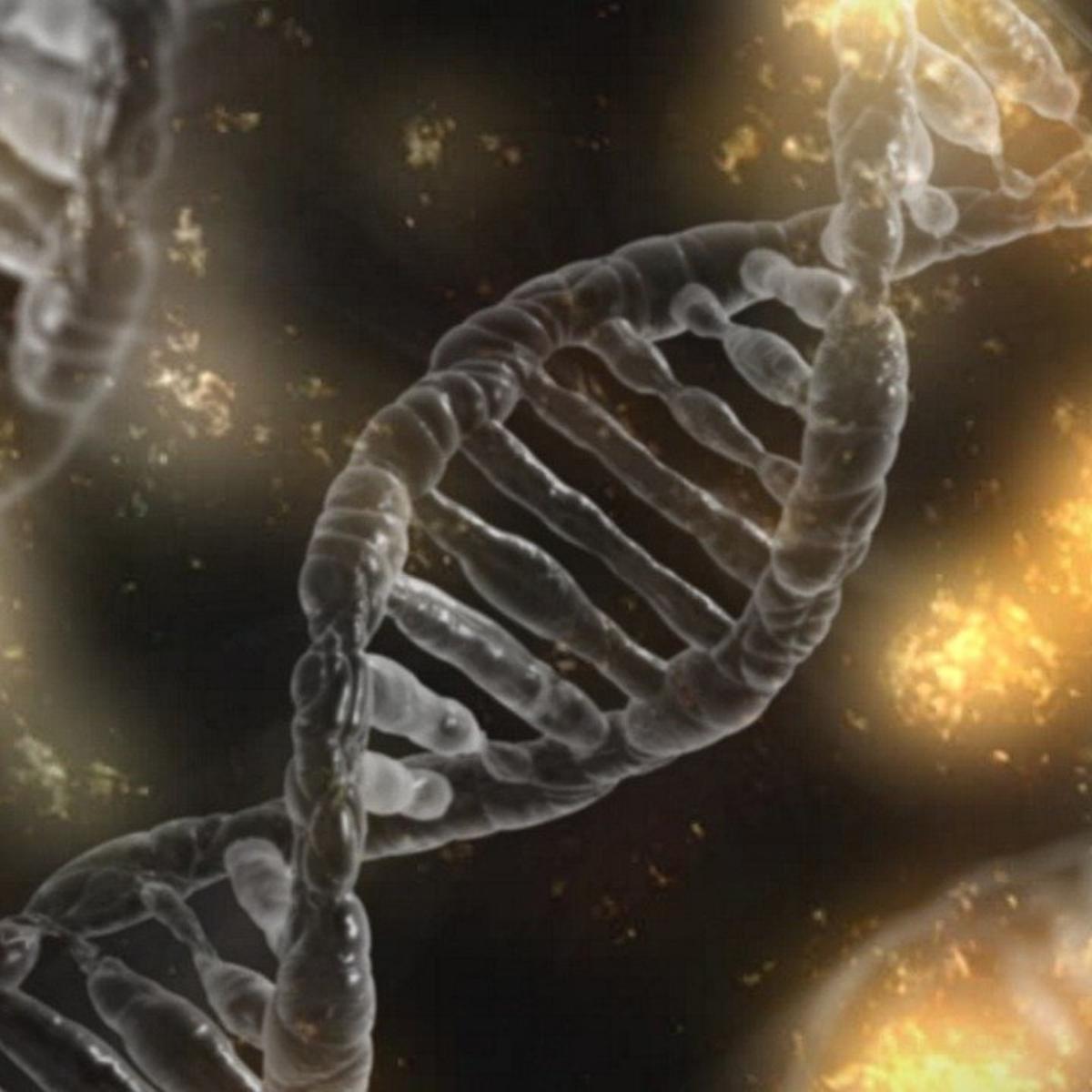 Misterioso DNA a quattro filamenti