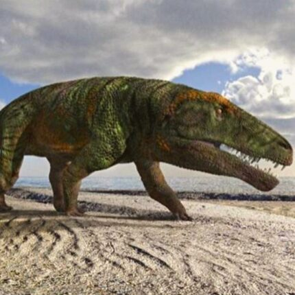Scoperto un nuovo dinosauro