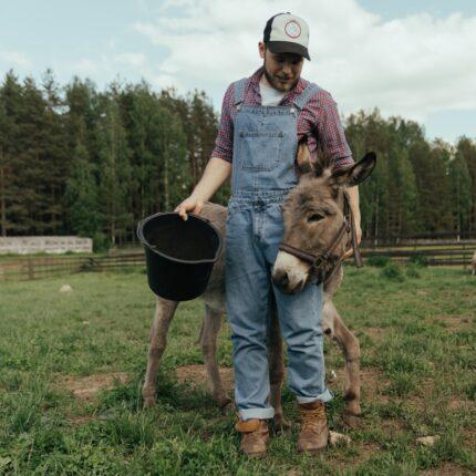 Imprese agricole guidate da giovani