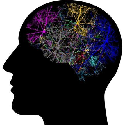 I fattori del Parkinson