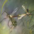 App per le zanzare