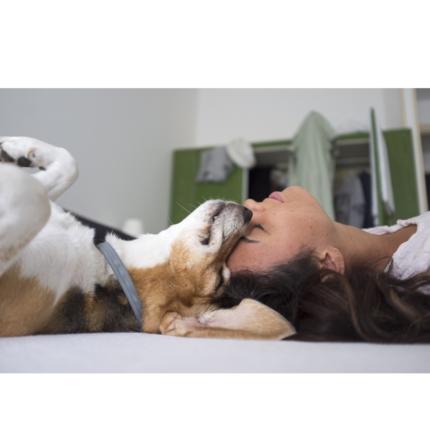SARS-CoV-2 infezione dei nostri animali domestici è possibile ed è molto comune